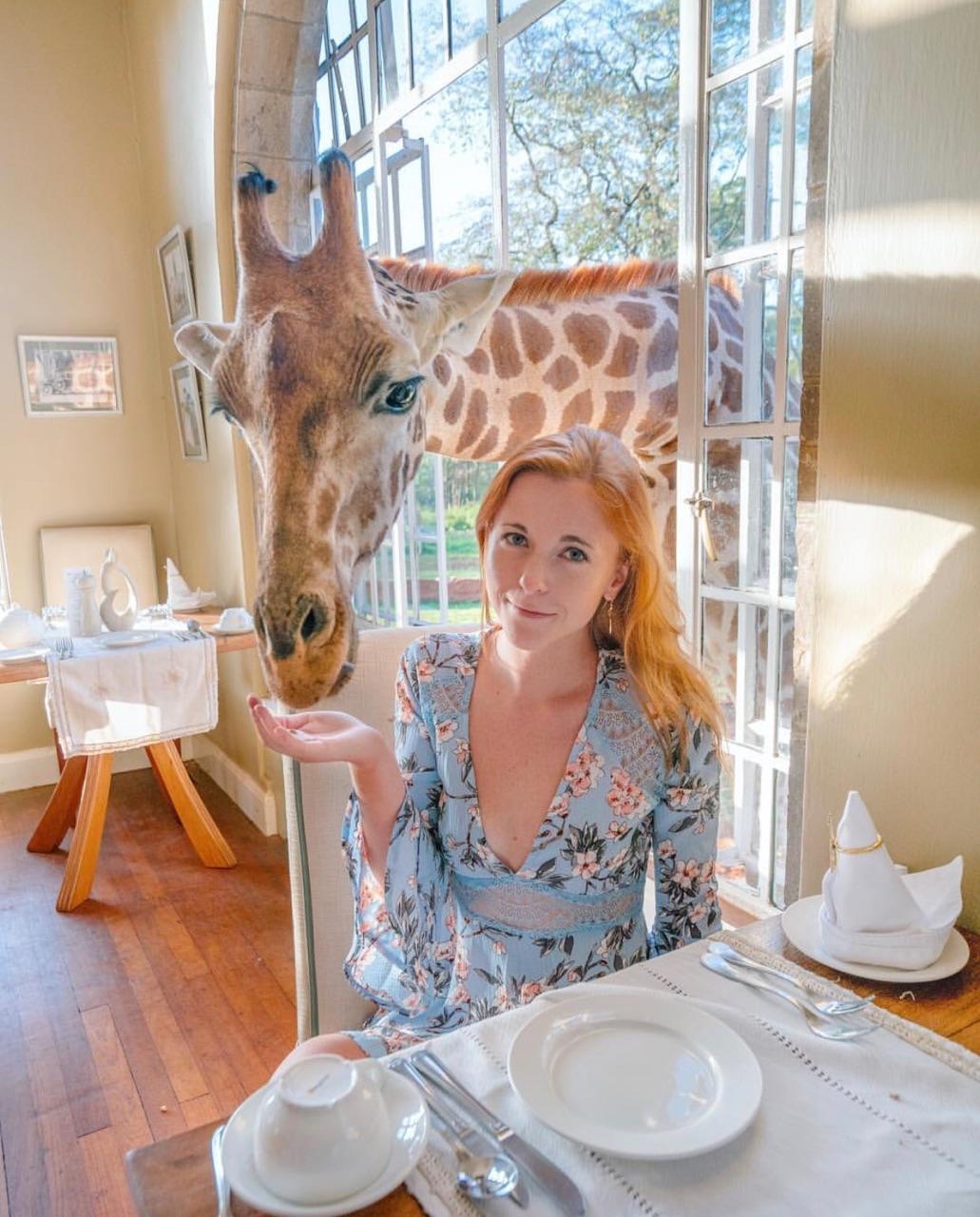 giraffe manorr kenya
