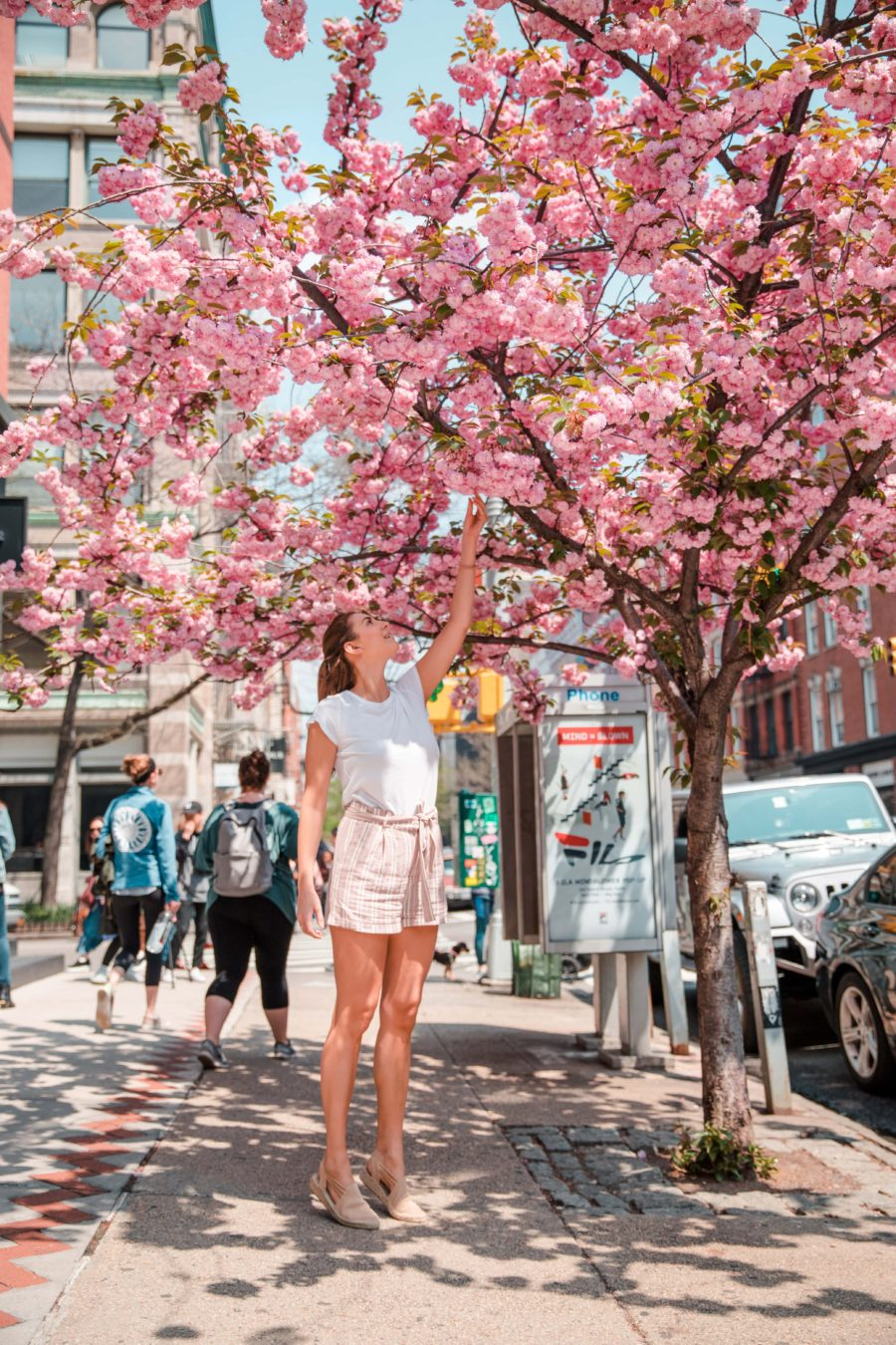 6 Charming Things to do in NYC During Spring: Hunt for Cherry Blossoms